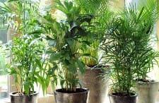 Abonos caseros para las plantas