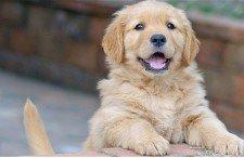 cachorro-Domir mejor