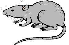Eliminar ratones - Truco casero